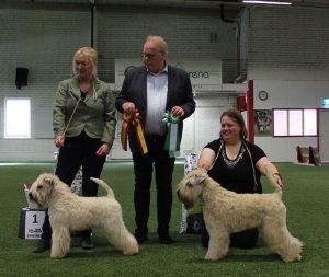 Lucas Silkcroft Soft Coated Wheaten Terriers 2018