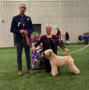 Lucas Tangahed 2017 - Silkcroft Soft Coated Wheaten Terriers 2017