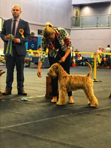 Nikon TPG2 Taunton 2018 - Silkcroft Soft Coated Wheaten Terriers 2018