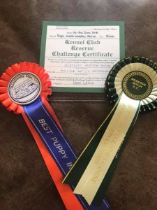 Silkcroft Soft Coated Wheaten Terriers 2018