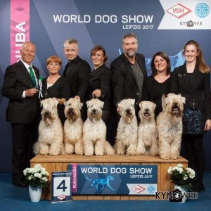 WDS 2017 Silkcroft Soft Coated Wheaten Terriers 2017