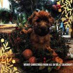Shutters Puppies 2017 - Silkcroft Soft Coated Wheaten Terriers 2018 - Week 8